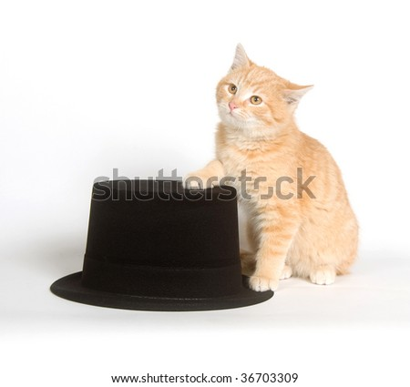 top hat cat. next to a black top hat on