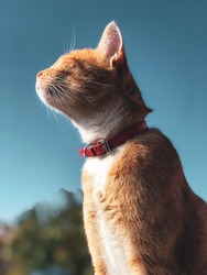 Yellow cat with blue sky behind