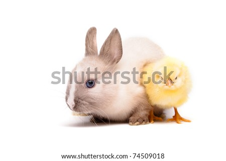 Yellow chick and bunny
