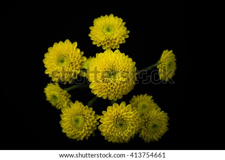 Yellow Chrysanthemum bouquet isolated on black background Foto stock ©