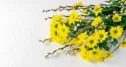 Yellow chrysanthemums and willow twigs bouquet on the white table horizontally. Nice greeting card for Mother's day or Easter holiday.