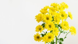 Yellow chrysanthemums bouquet on the white background isolated. Nice flowers for greeing with Mother's day, Valentine's day, women's day or any anniversary.