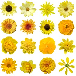 Yellow collage flower