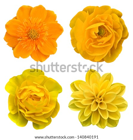 Yellow collage flowers