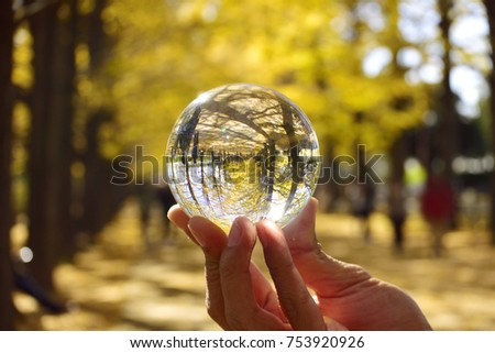 Yellow Colored Autumn in Crystal Ball #753920926