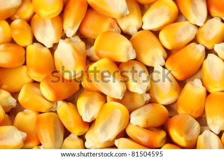 Yellow corn collection