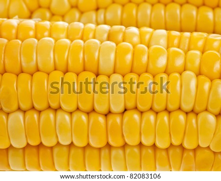 yellow  corn ear,  close up  macro surface top view  background