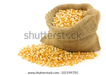 yellow corn grain in a burlap bag on a white background #101599705