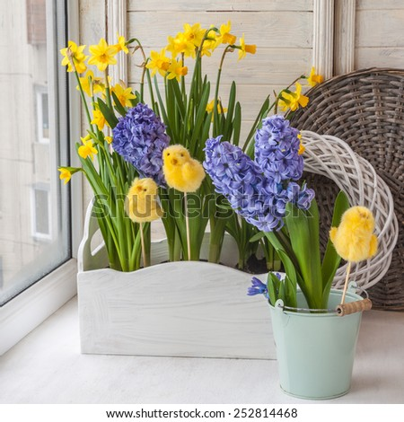 Yellow daffodils and hyacinths in blue balcony boxes for flowers on the balcony