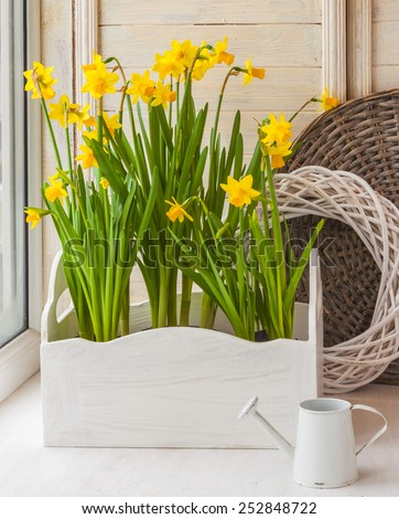Yellow daffodils in balcony boxes for flowers and decorative watering can on the balcony
