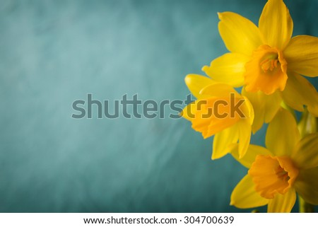 yellow daffodils on a colored...