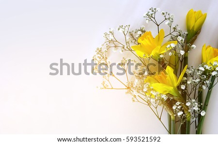 Yellow daffodils on a white background with artistic glow effect