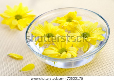 Yellow daisies flowers in glass bowl. Spa theme