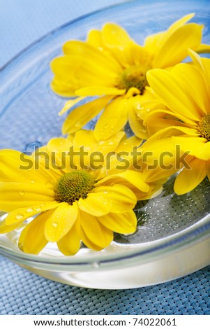 Yellow daisies in glass bowl on blue background