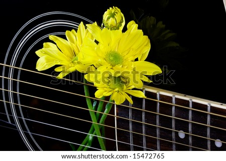 Yellow daisies in the strings of a black guitar