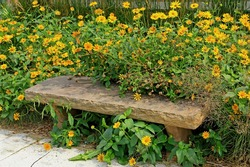 Yellow daisies surrounding a stone bench in the summer at Osceola, Wisconsin.