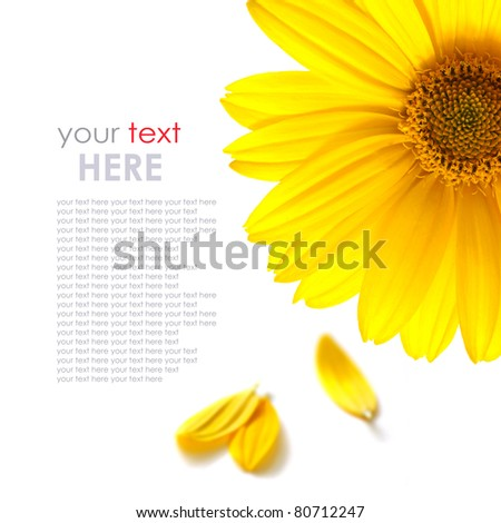 yellow daisy flower isolated on white background