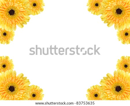 Yellow daisy-gerbera flowers create a frame on white background | EZ ...