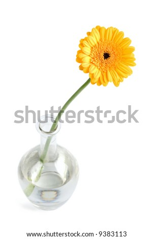 yellow daisy in vase isolated #9383113