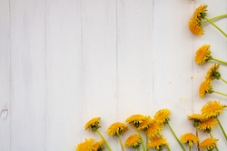 Yellow dandelion flowers on a white wooden background. Top view, flowers are located at the bottom of the image.