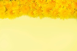 Yellow dandelions lie in a row with the top on a yellow background. Frame. Spring or summer mood. Place for text.