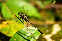 yellow Dragon fly sitting at the pond