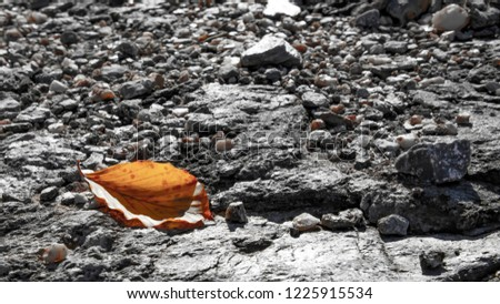 Yellow dry autumn leaf in the backlight, lying on a gray ground strewn with small stones. Greece #1225915534