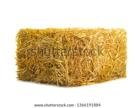 yellow dry barley straw isolated on white background #1366191884
