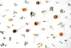 yellow dry flowers, branches, leaves and petals pattern isolated on white background. flat lay, overhead view