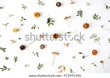 yellow dry flowers, branches, leaves and petals pattern isolated on white background. flat lay, overhead view #472491346