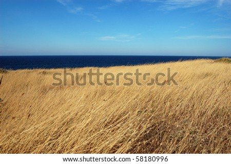 yellow dry grass field, blue sea and sky - stock photo