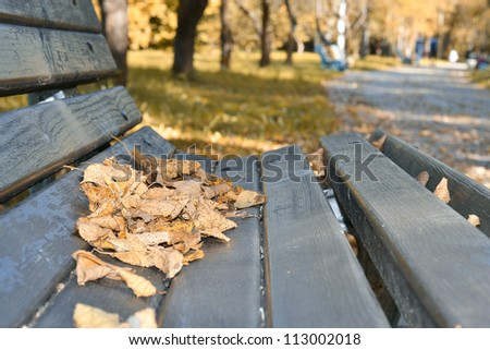 Yellow Dry leaves on the bench
