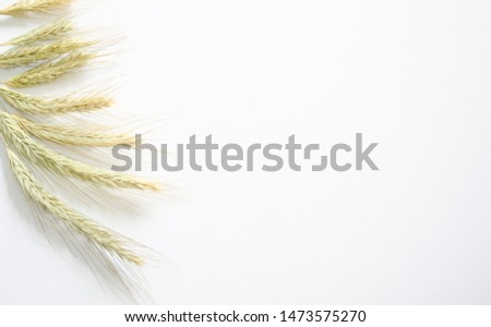 Yellow ears of wheat lie on a left on the left on a white background #1473575270