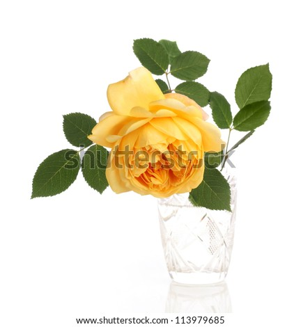 yellow english rose in crystal glass on white background