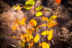 Yellow faded autumn leaves in a forest. Selective focus. Blurred autumn nature background