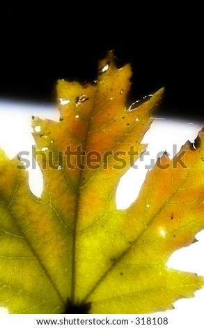 yellow fall leaf against abstract background