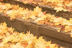 Yellow falling leaves on granite steps on autumn time.
