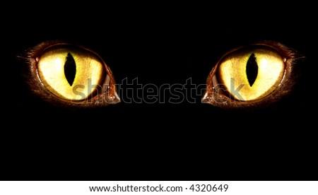 yellow feline eye in the dark
