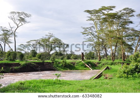 Yellow fever acacias and muddy river of a typical Kenya game preserve