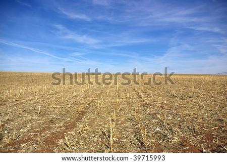 Yellow field, alentejo region, Portugal.