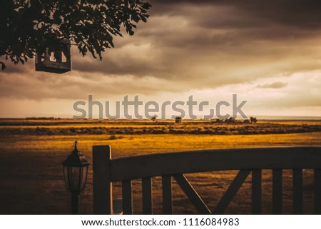 yellow field  cloudy sky  in...