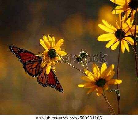 Yellow Field Flowers and Monarch Butterfly