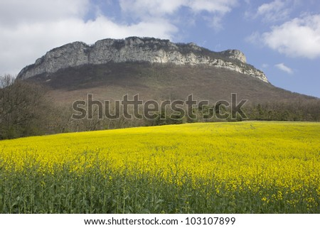 Yellow field of colza in a typical landscape of south of France