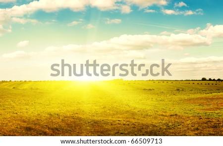 Yellow field of haystacks under blue sky. Sunset.