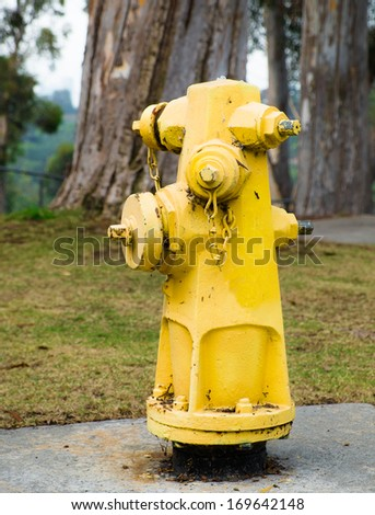 Yellow Fire Hydrant in a Park for Fire Extinguishing in a Emergency