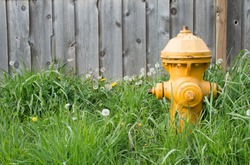 Yellow fire hydrant on green grass with wooded fence background