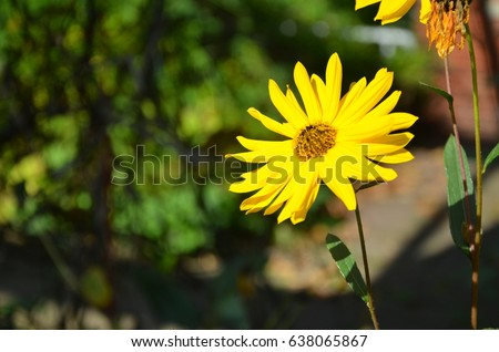 Yellow flower.  #638065867
