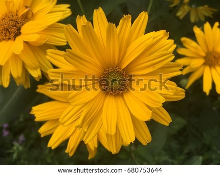 Yellow flower #680753644