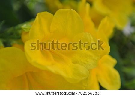 yellow flower #702566383