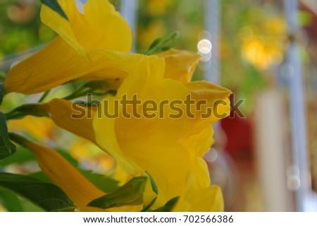 yellow flower #702566386